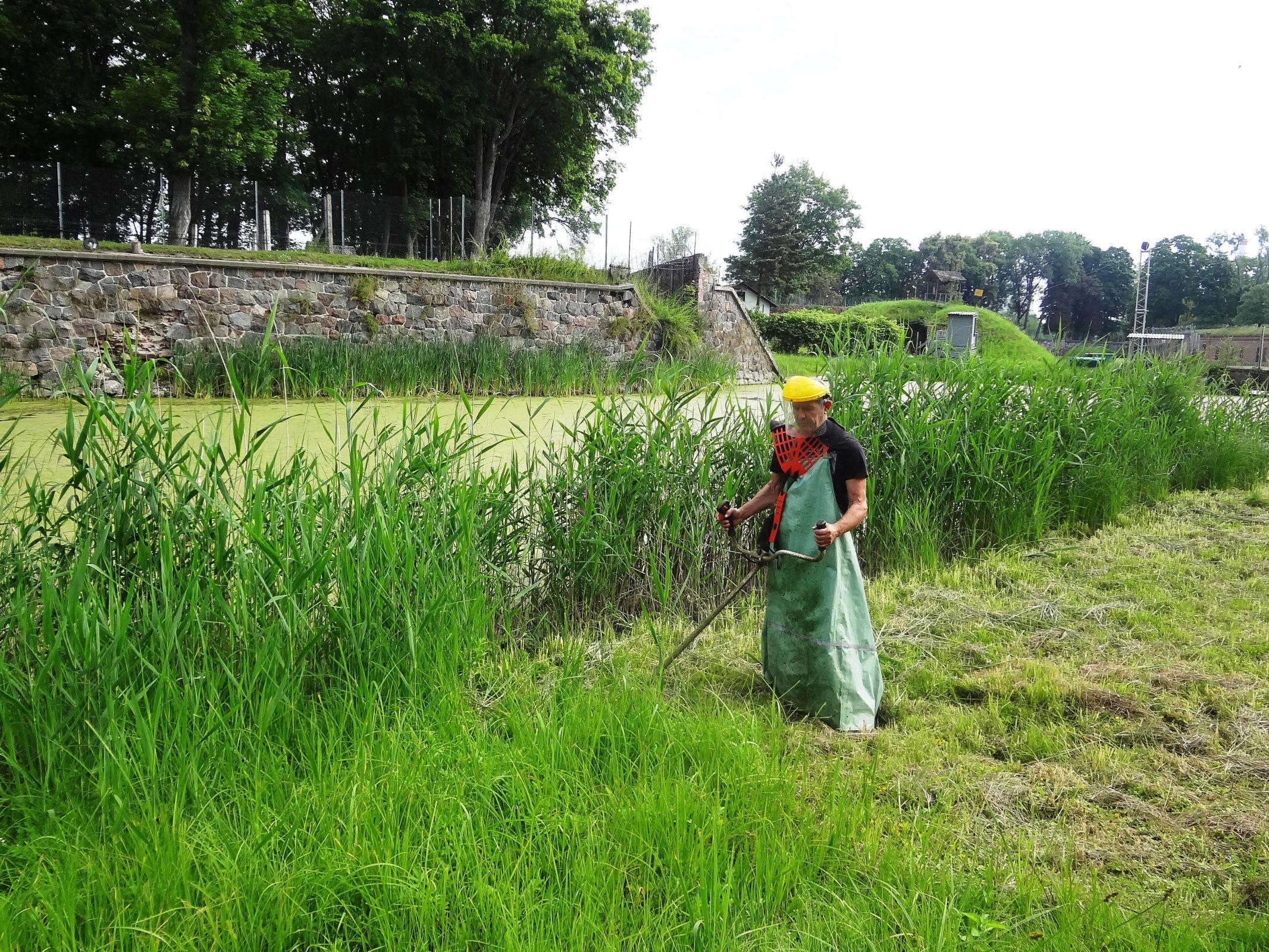 Покос травы в Москве и области